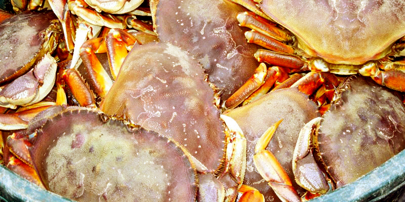 bucket-of-crabs-800×400-redder