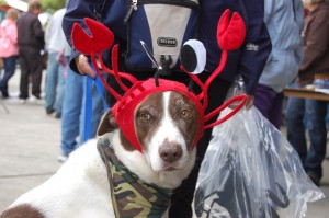 Dog with Crab hat